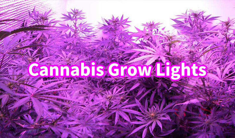 2020 Best Interior LED Grow Lights Guide