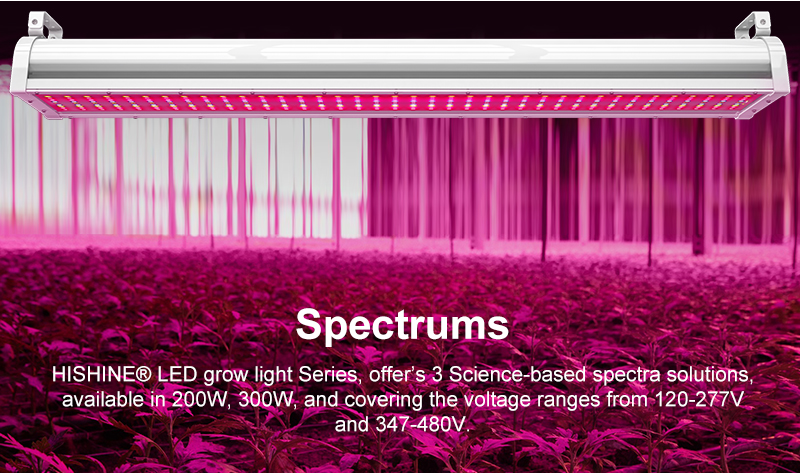 LED grow Light Spectrums