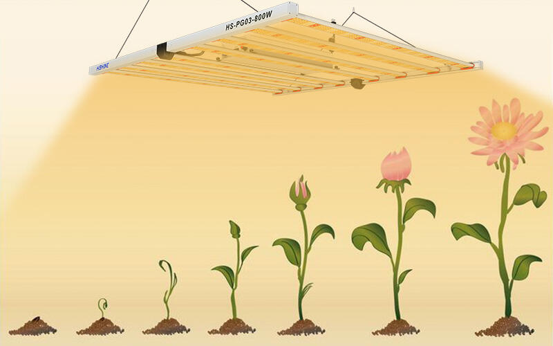 What is Plant Growth Lamp ?