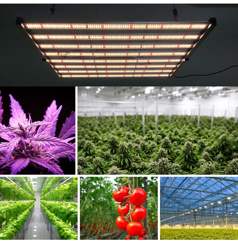 LED Grow Light 800W Applications