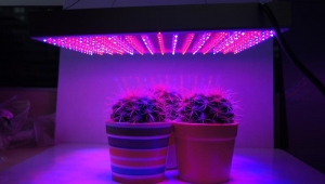 Why is LED Grow Light better?