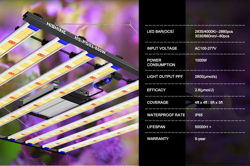 The latest 1000w LED plant light-5x5 feet full spectrum plant growth light