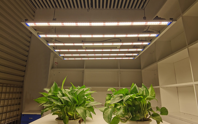 The best recommendation 1000W Grow Light